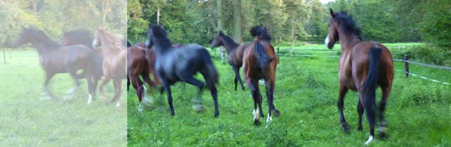 header-photo-paard.jpg